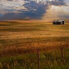 Farm Land USA by Kathy Weaver