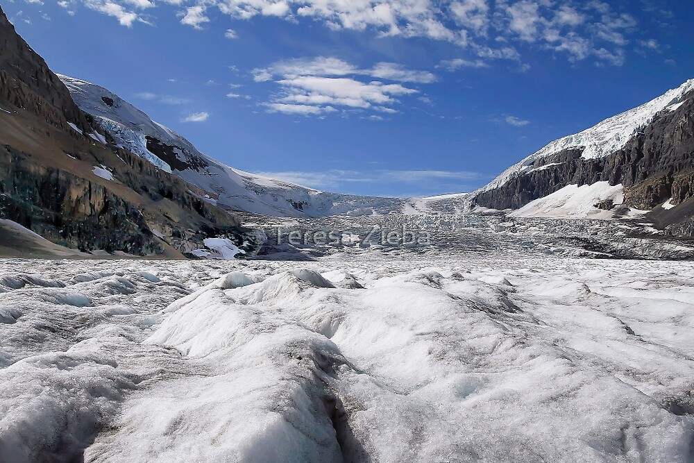 Athabasca Glacier by Teresa Zieba