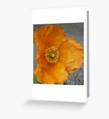 orange californian poppy flower Greeting Card