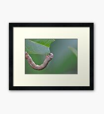 The Hungry Little Caterpillar Framed Print