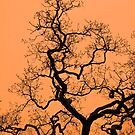 Sunsets and Trees by Darren Glendinning