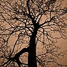 The Darkness and Tree's by Darren Glendinning