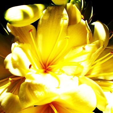 sunshine by kateilles