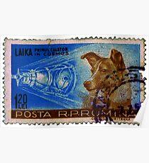 Laika, der erste Reisende in Cosmos (rumänische Briefmarke von 1959) Poster