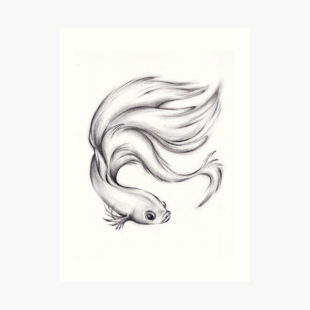 River belle charcoal pencil drawing of a siamese betta fighting fish art print