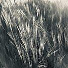 Sun on Rye in Schwarz und Weiß. von Billlee