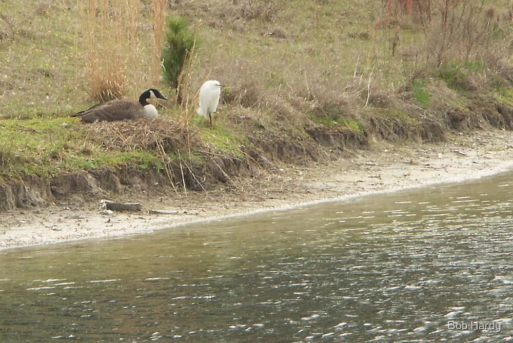 Goose Guard by Bob Hardy