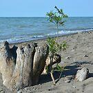 Das Leben am Ufer des Lake Erie wurde erneuert. von Billlee