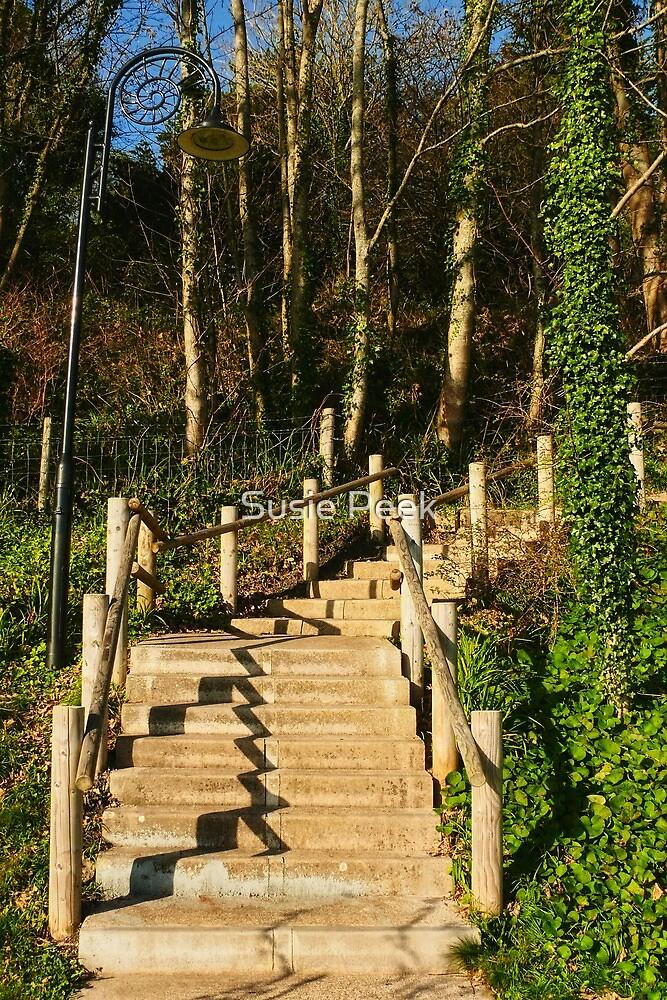 Woodland Walk by Susie Peek
