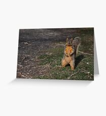 Silly Squirrel Greeting Card
