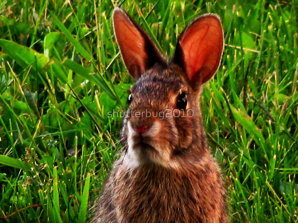 March Hare by shutterbug2010