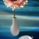 Breakfast with a gerbera by Anthemis