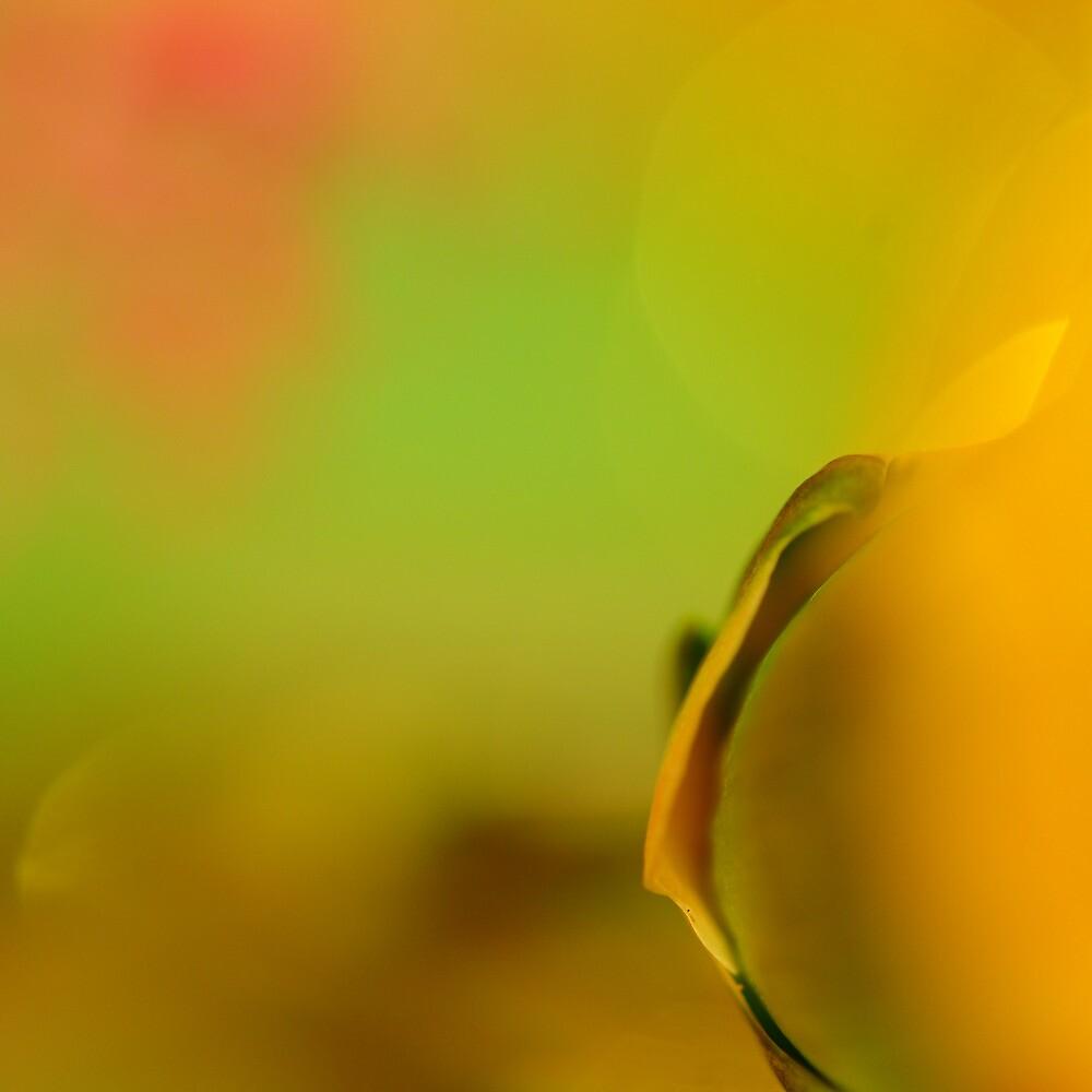 Yellow Submarine by duncandragon