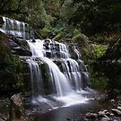 Liffey Falls by CezB