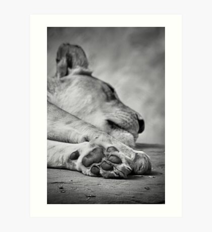 The Lion's Paw Art Print