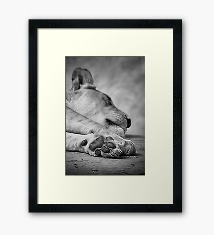 The Lion's Paw Framed Print