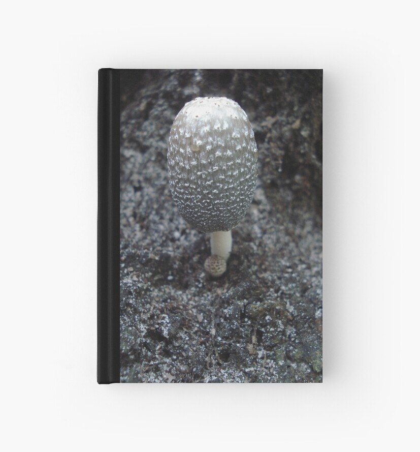 Mushroom on Magnolia by May Lattanzio