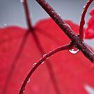 Maple Leaf abstract II by Ostar-Digital