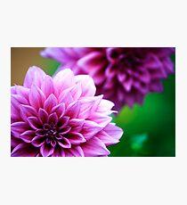 Dahlia in Springtime Photographic Print