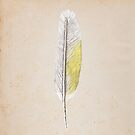 Sulphur Crested Cockatoo Feather by Daniel Watts