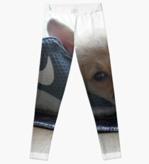 Corgi Puppy Leggings