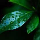 Rain, The giver of life by Nerone