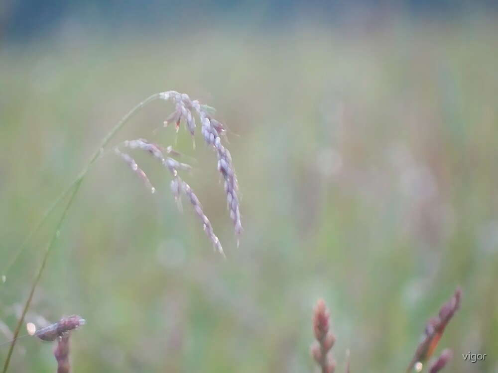 Summer Grass 12 by vigor