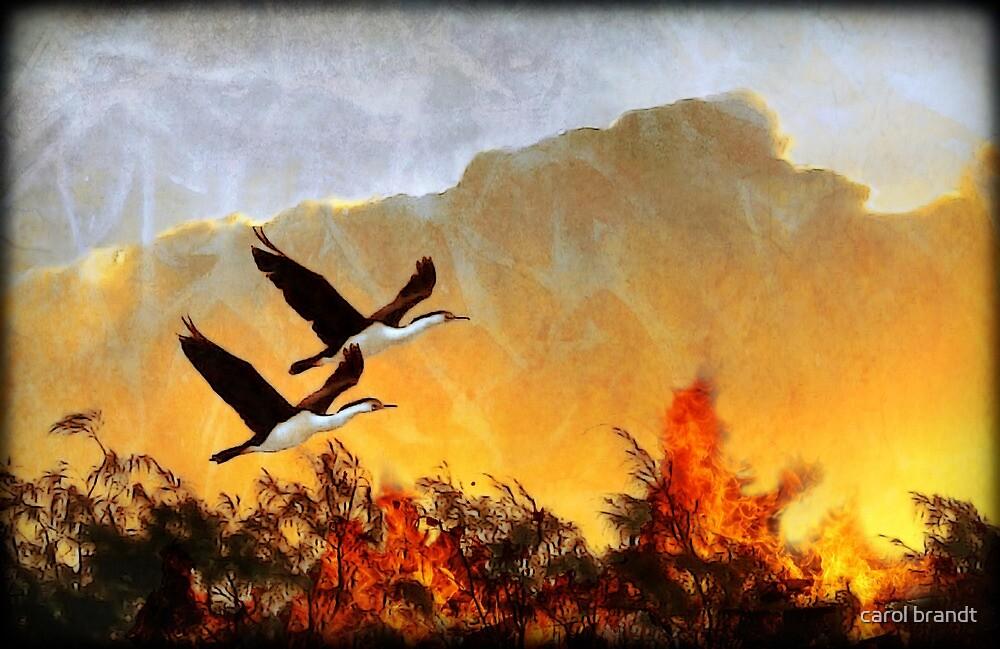 flying free by carol brandt
