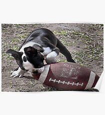Its Puppy Football Time Poster