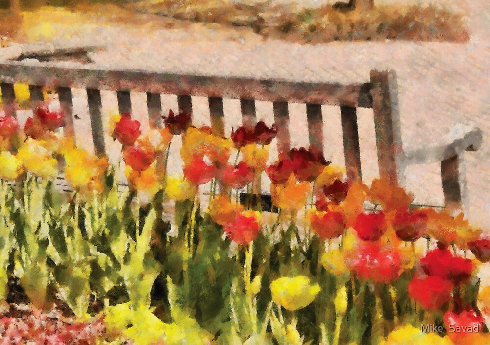 Tulips - Retirement can be sweet by Michael Savad