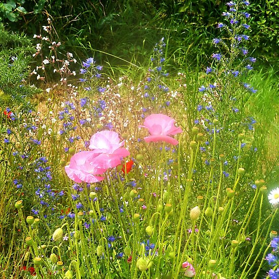 Wild Flowers for the people of Bridport to enjoy.. by lynn carter