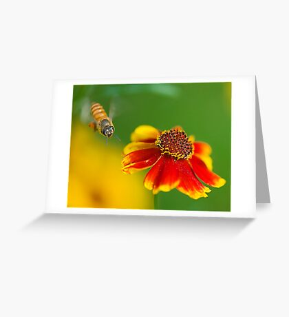 A Moment in Time Greeting Card