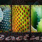 Cactus Design by taueva