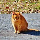 Neighborhood Cat by Cynthia48