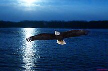 Evening Eagle by tcat757