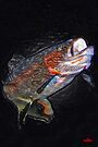 Vacuum Sealed Rainbow Trout by Brian Pelkey