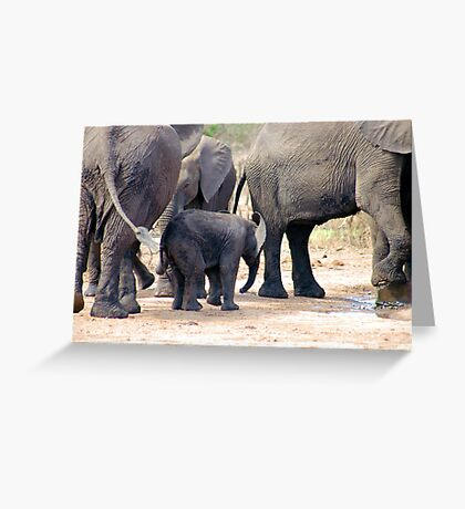 THE LITTLE GUARDED BABY ELEPHANT Greeting Card