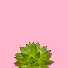 Pink Succulent by Candypop
