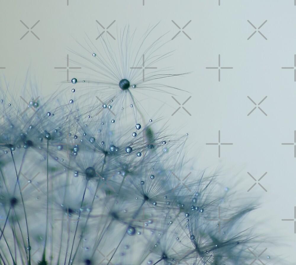 lace by Ingrid Beddoes