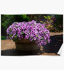 Barrel of Purple Petunias Poster