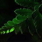 Green on black by jonpalma