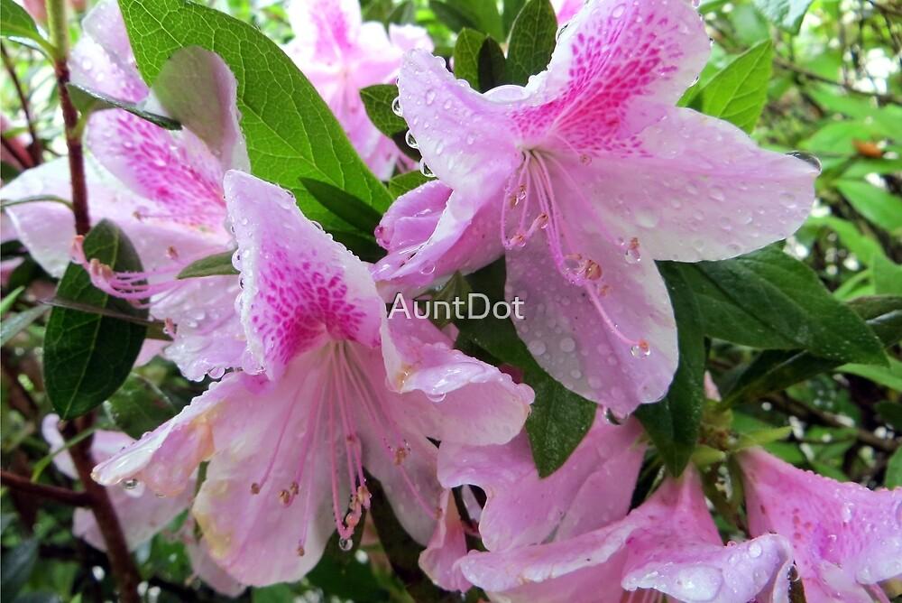 Azaleas In the Rain by AuntDot