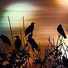 Vibrant dawn by shalisa