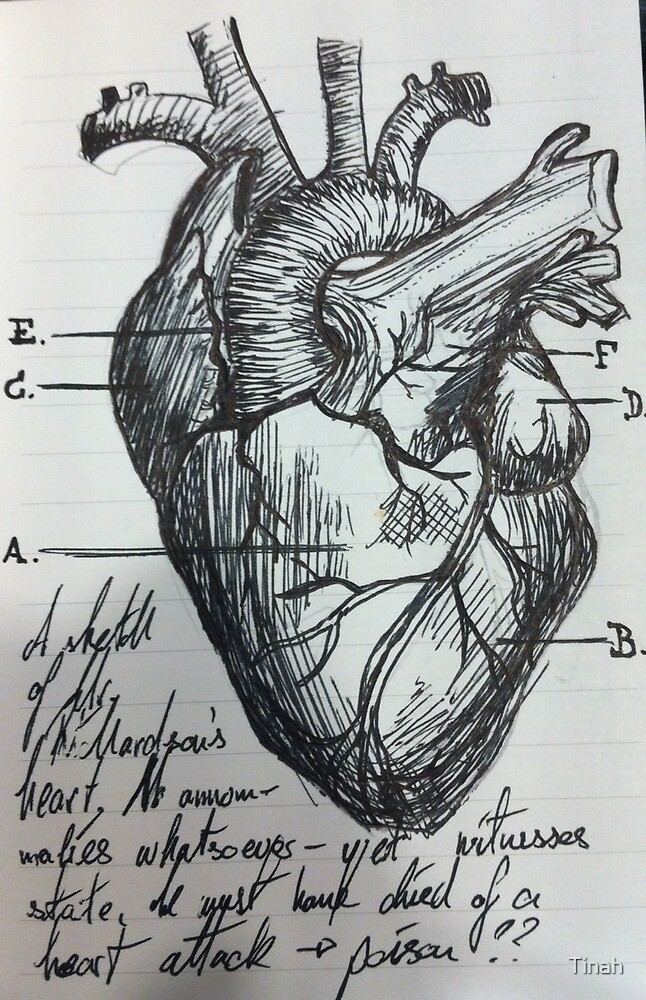 The human heart by Tinah