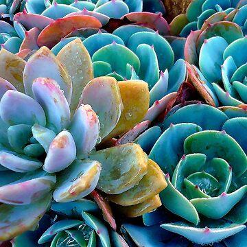 Cactus! by rozmcq