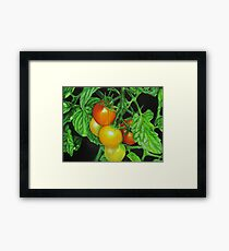 Tomatoes - Garden treat Framed Print