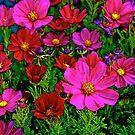 Springtime by Ray4cam