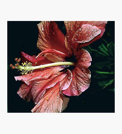 FLOURISH Photographic Print