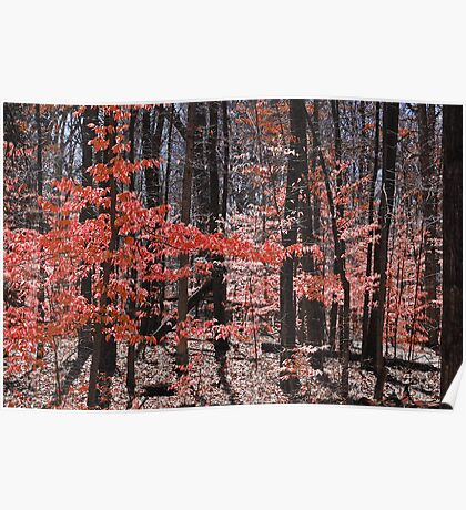 Fall Forrest in Red Poster
