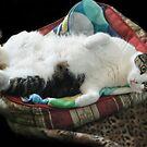 Please Rub My Tummy! by Heather Friedman